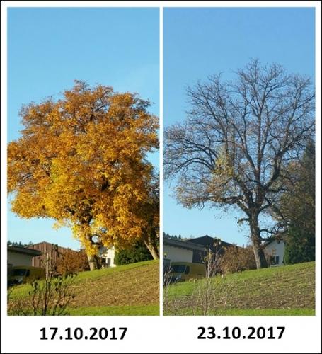 Baum nach Ferien.jpg