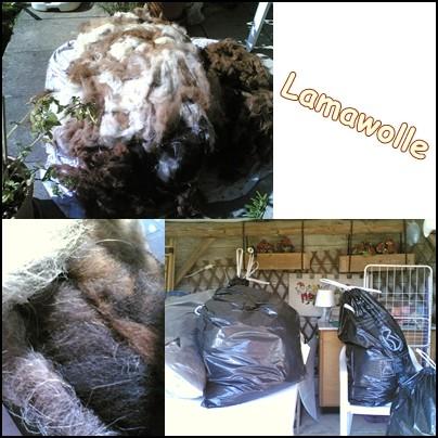 Lamawolle die zweite.jpg