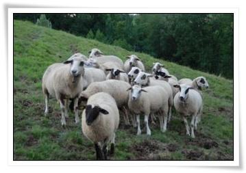 Herde Blog.jpg