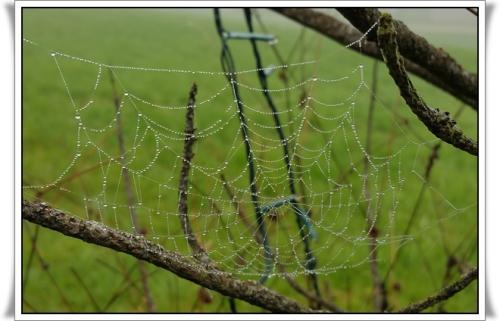 Spinnennetz GER.jpg